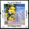 Марокко  2019